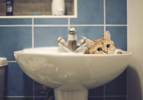 cyoot kitteh of teh day sink bathroom Cats - 6978145280