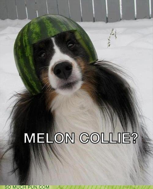 collie,melon,smashing pumpkins,melancholy,obvious joke is obvious