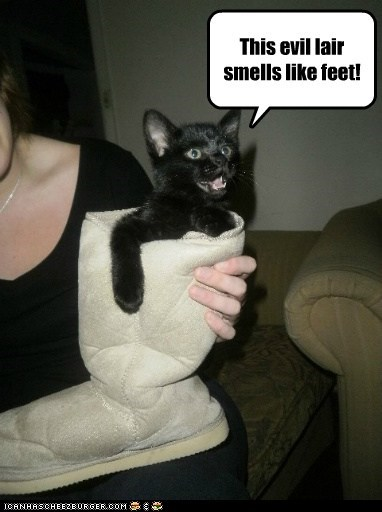 kitten evil Cats apartment - 6978188288