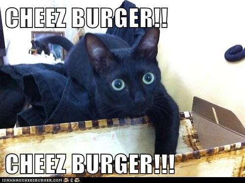 Cheezburger Image 6978446592
