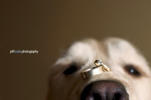 rings carry snout nose ring bearer dogs - 6978515712