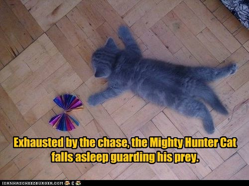 Exhausted by the chase, the Mighty Hunter Cat falls asleep guarding his prey.