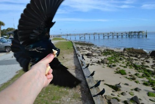 timing photography bird animals - 6978647552