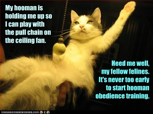 cat obedience training funny - 6978816512