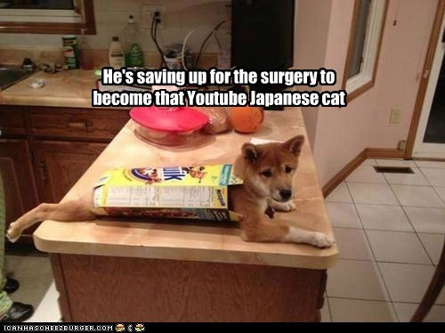 He's saving up for the surgery to become that Youtube Japanese cat