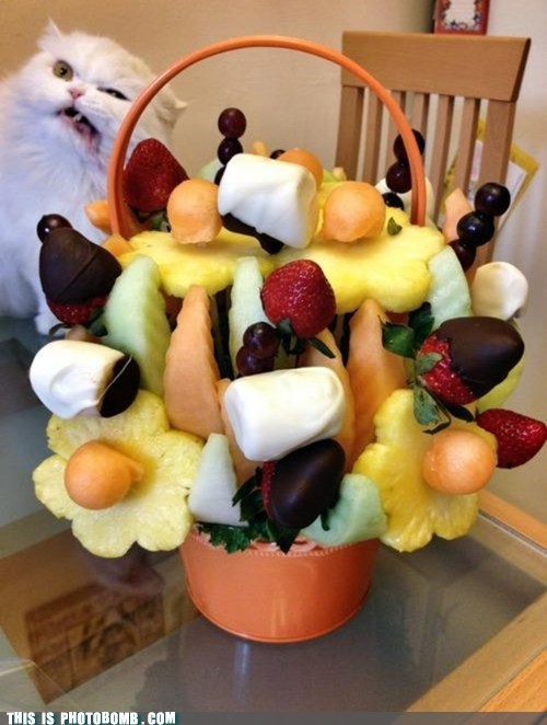 cat hairball fruit - 6979089664