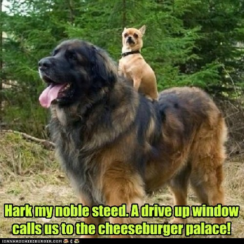 Hark my noble steed. A drive up window calls us to the cheeseburger palace!