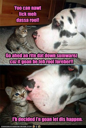 cat kitten great dane comic kitty dogs funny - 6979337472