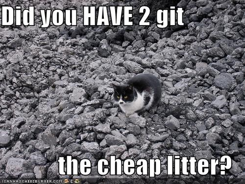 cheap litter,kitler,lolcats