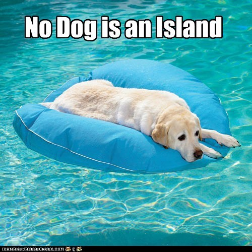 flotation device dogs swimming pools island labradors