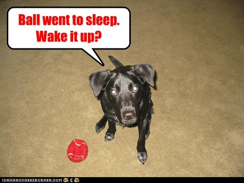 dogs,wake up,ball,what breed,sleeping