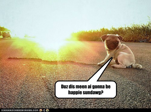 dogs sunrise pugs Sundog