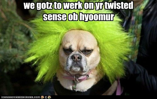 dogs clown not fun what breed sense of humor
