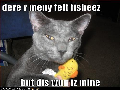 dere r meny felt fisheez  but dis wun iz mine