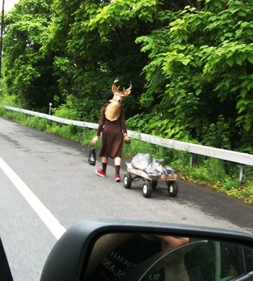 wagon,highway,deer,poorly dressed,g rated