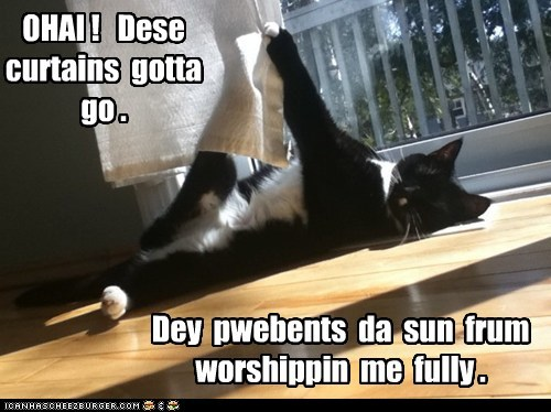 cat,curtains,worship,sun,funny