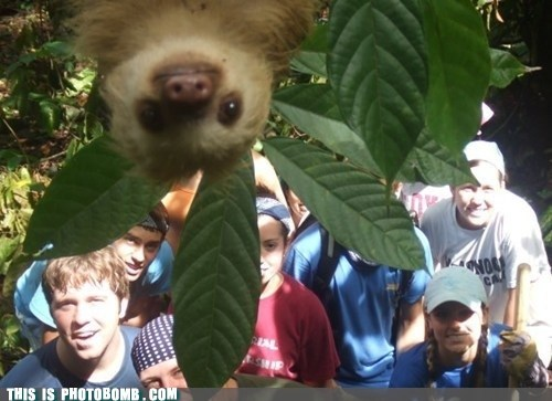 peeking cute sloth