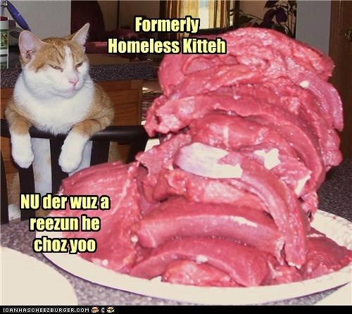 Formerly Homeless Kitteh NU der wuz a reezun he choz yoo