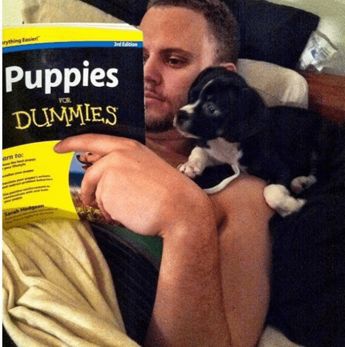 dogs bonding puppies read dummies book - 6980614656