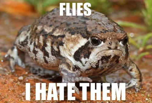 amphibian hate toad grumpy angry mad frog - 6980691456