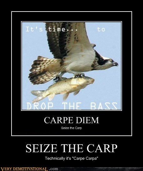 "SEIZE THE CARP Technically it's ""Carpe Carpa"""