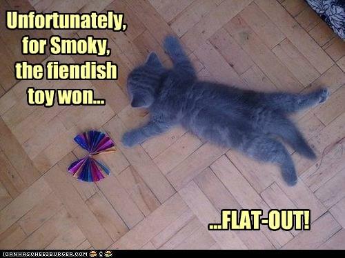 cat toy tired kitten sleep kitty funny - 6981095168