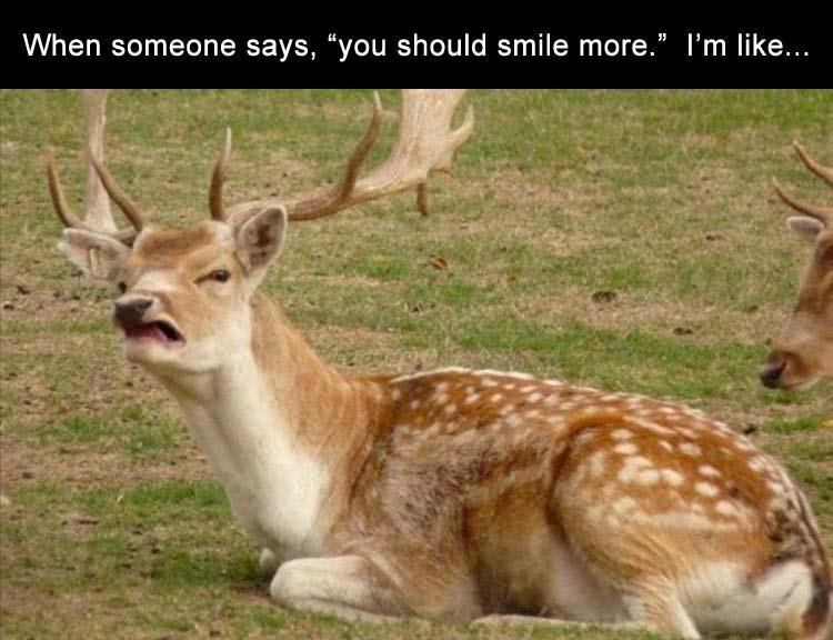 animal memes, funny animals, cute animals