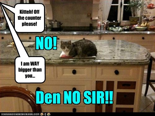 disobedient bad cat naughty kitchen funny - 6981125376