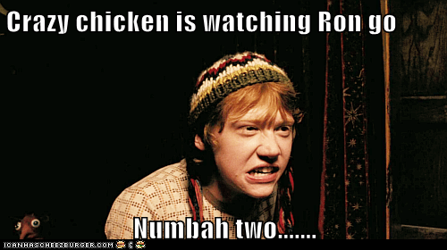 Crazy chicken is watching Ron go  Numbah two.......