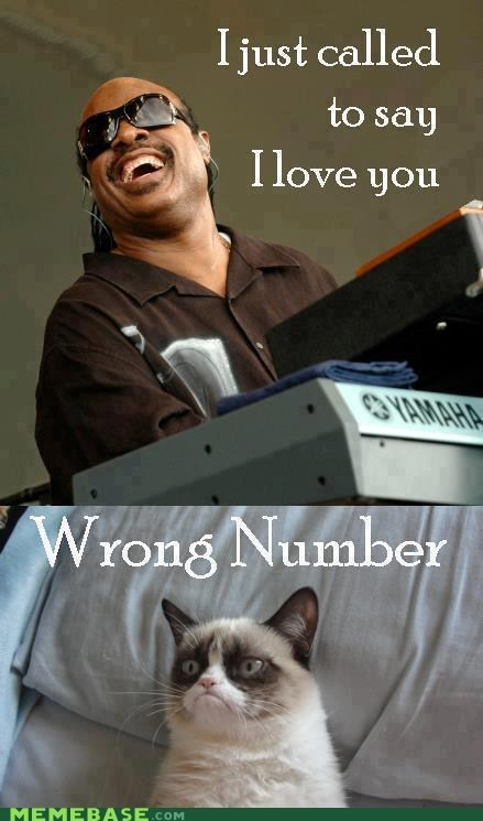 stevie wonder,call,Grumpy Cat