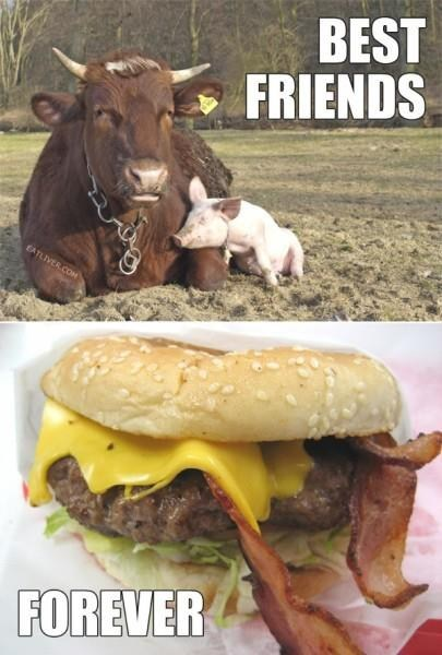 forever,best friends,together,bacon cheeseburger,food,pig,cows