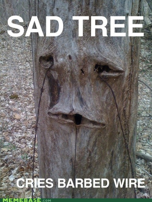IRL sad tree barbed wire - 6981445632