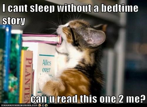 read,kitten,book,story,kitty,funny