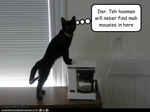 Der. Teh hooman will neber find mah mousies in here Chech1965 170113