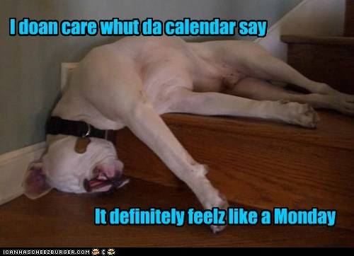 dogs stairs smooshed mondays what breed - 6981714176