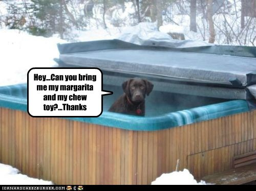 Hey...Can you bring me my margarita and my chew toy?...Thanks