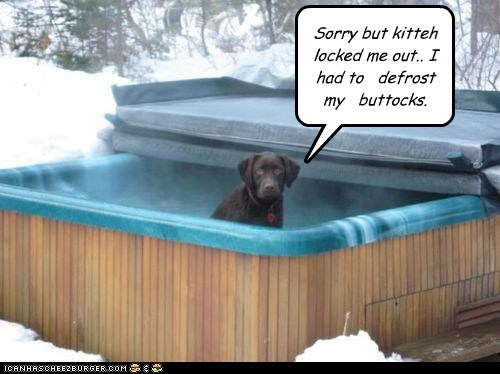 snow labradors locked ou winter locked out hottub