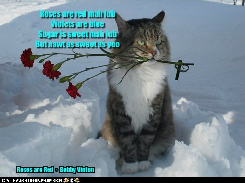 Roses are red mah lub Violets are blue Sugar is sweet mah lub But nawt as sweet as yoo Roses are Red - Bobby Vinton