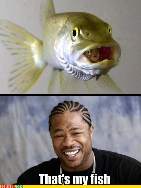 Xzibit yo dawg Inception fish 2