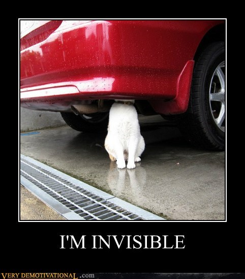 cat invisible hiding - 6982188544