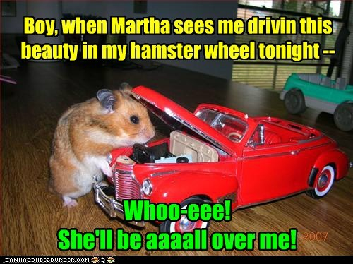 hamster wheel date cars hamsters driving - 6982289920