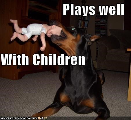 baby doberman pinscher playing - 698238720