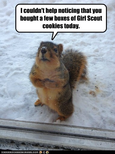 snow,girl scout cookies,peanut butter,squirrels,noticing,begging,hinting