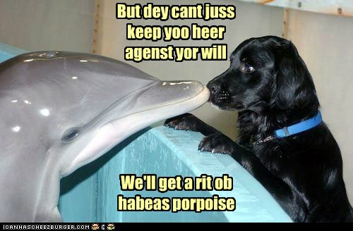 imprisoned dogs Lawyer Dog dolphins puns porpoises habeas corpus - 6982703616