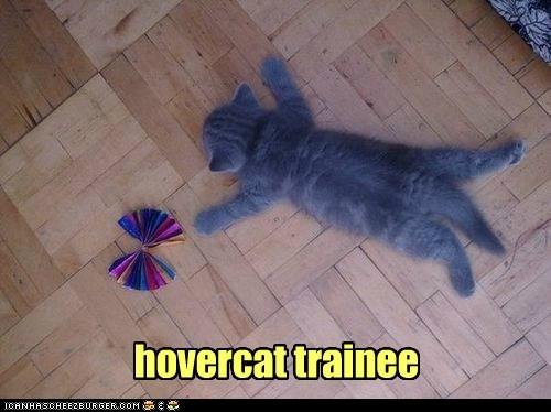 hovercat trainee