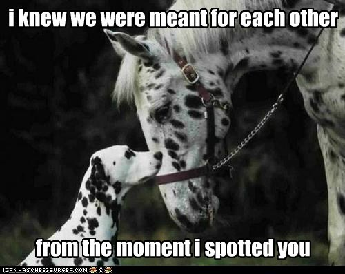 love at first sight,dogs,horses,dalmatians,spots