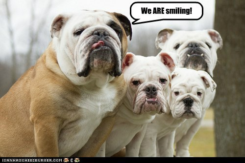 dogs smiling bulldogs droopy