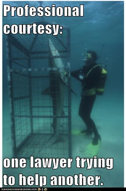 cage sharks professionals helping - 6983444992
