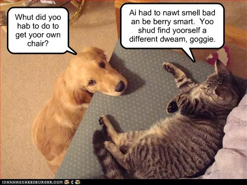 dogs,rough life,couch,golden retriever,Cats