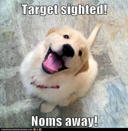 dogs puppies noms target sighted golden retriever - 6983484928